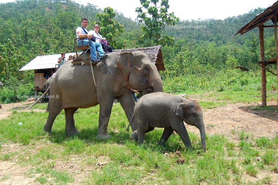 Pronti per l'Elephant Ride nel Doi Inthanon, escursione di trekking in Thailandia