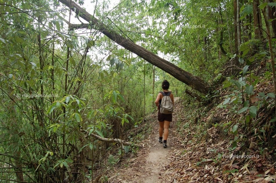 Trekking nel Doi Inthanon National Park