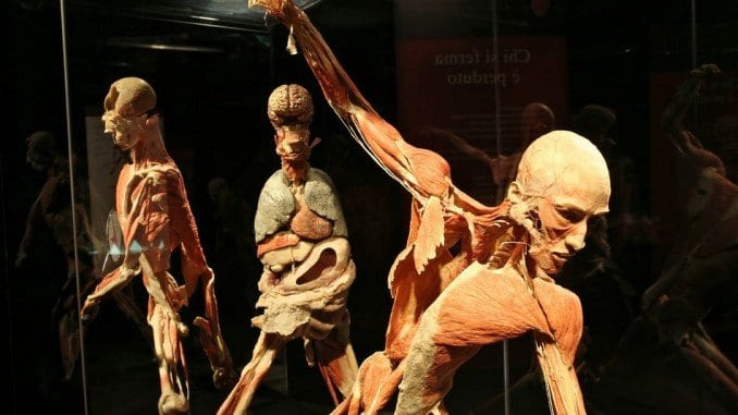 Body Worlds, move