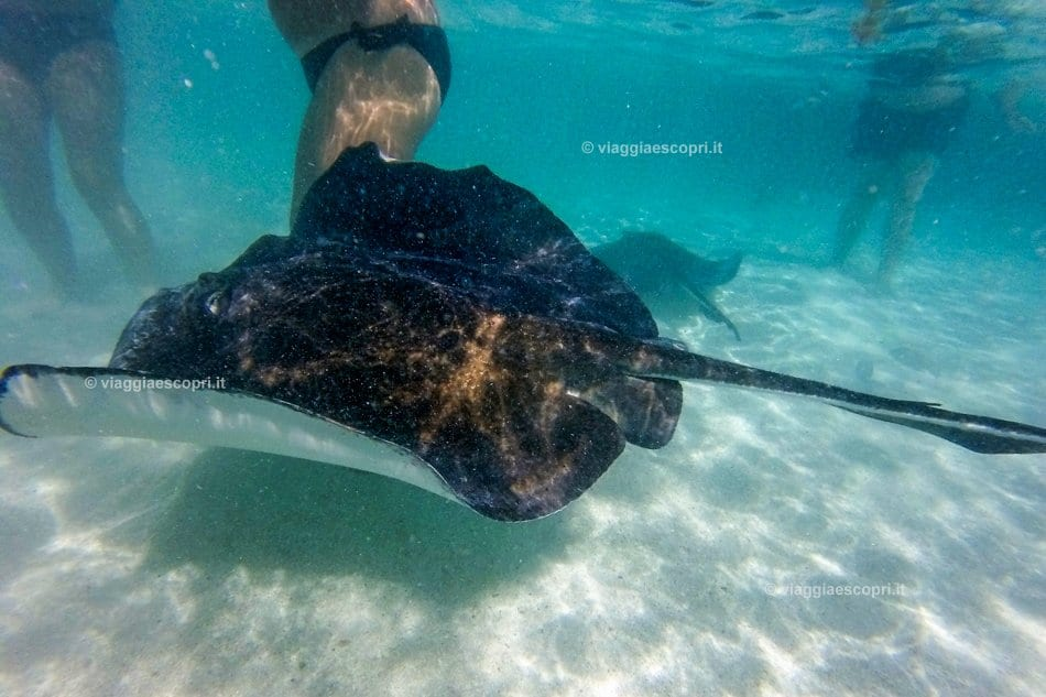 Stingray City, viaggio ad Antigua e Barbuda